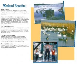 Wetland Benefits