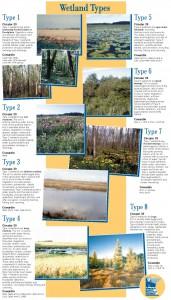 Wetland Types